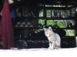 This little fellow was snapped on the first day of my Annapurna base camp hike, sitting on a shop table top in Ghandruk.