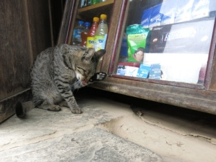 Cats of Nepal 3