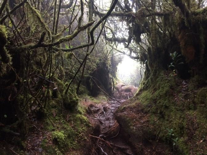 Gunung Irau hike