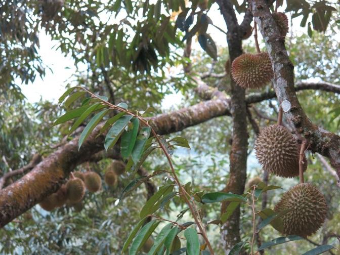 The Dusun @ Seremban