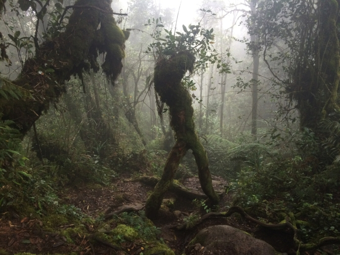 Gunung Batu Brinchang hike