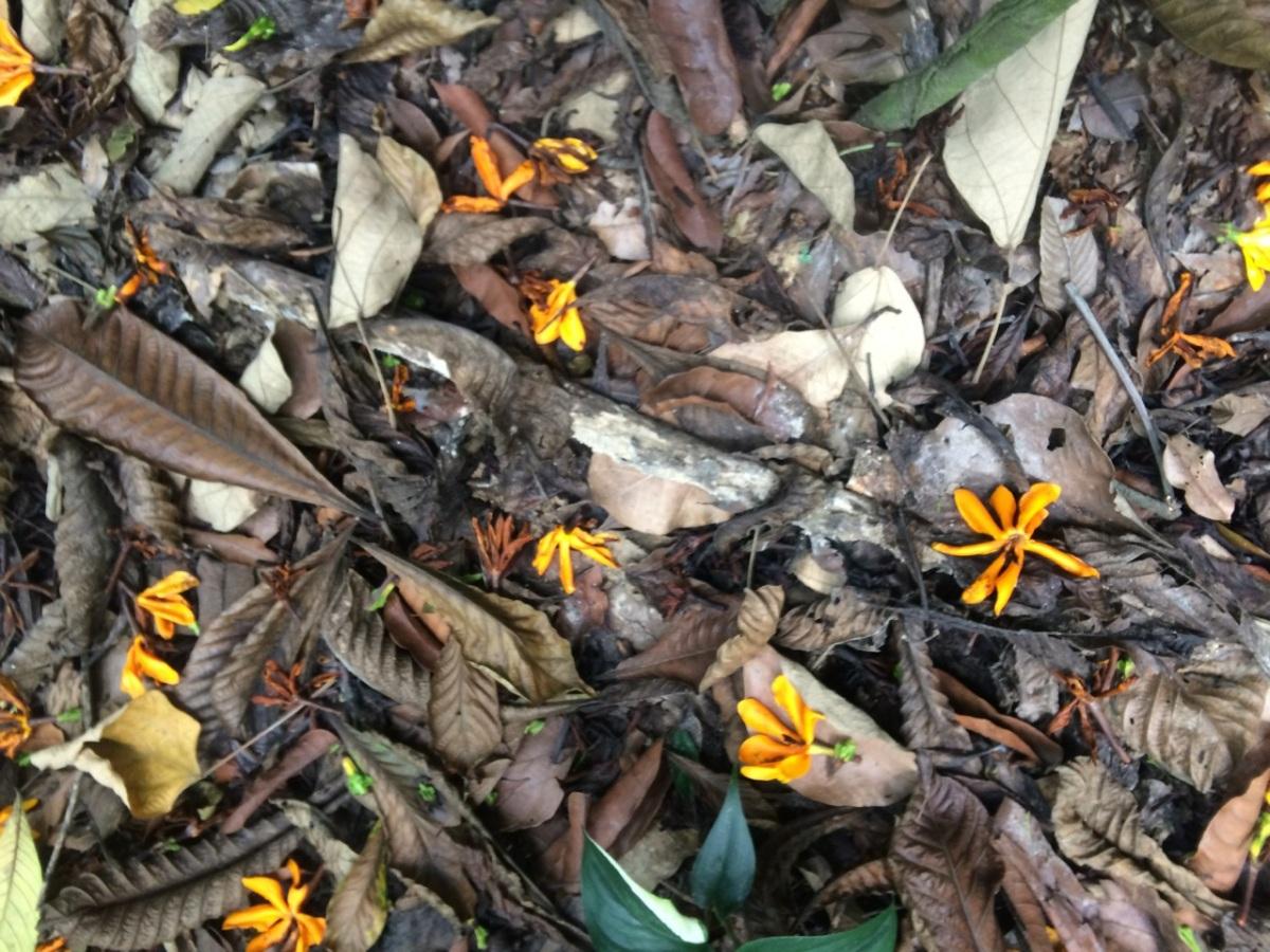 Denai Tiga Puteri hike @ Kota Damansara Community Forest