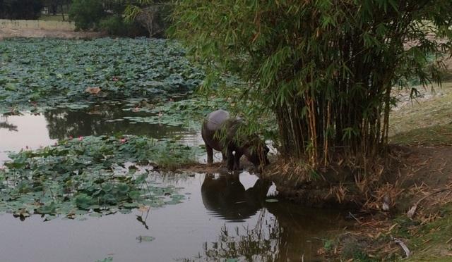 Cycling to Paya Indah Wetlands