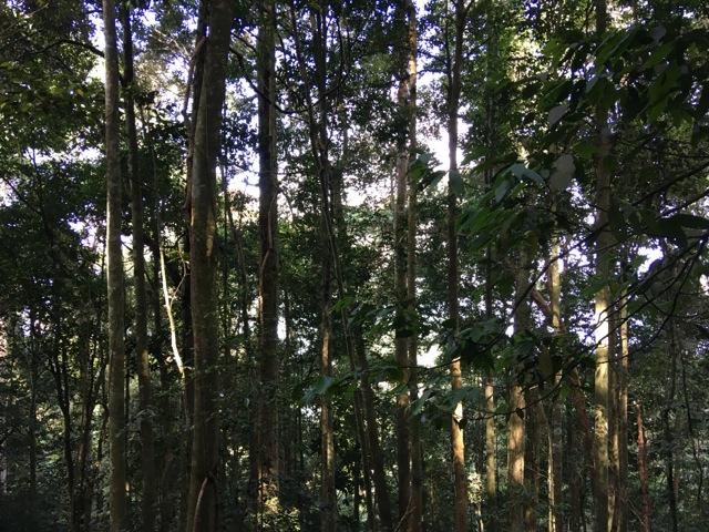 Gunung Liang hike