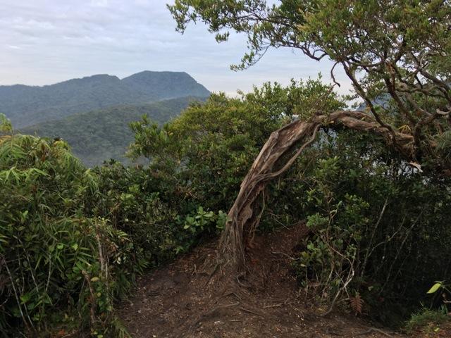 Gunung Yong Belar hike