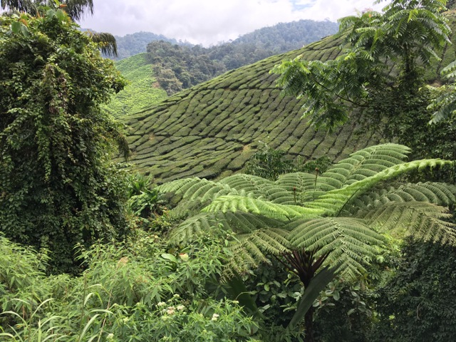 Cameron Highlands escape – a weekend of summit and scones