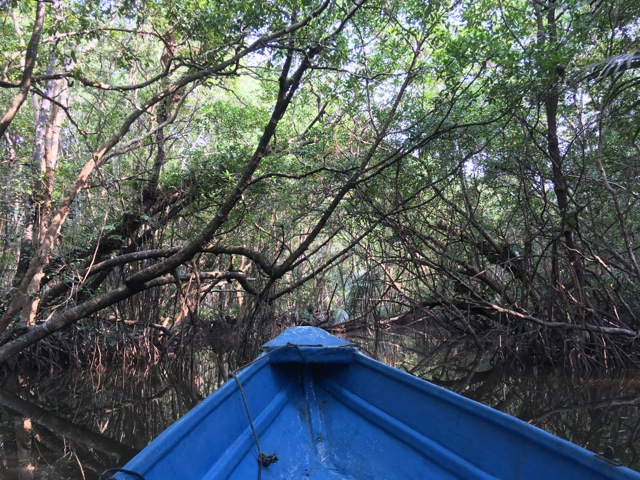 Mangrove River Tour and Firefly Tour @ Sungai Cherating