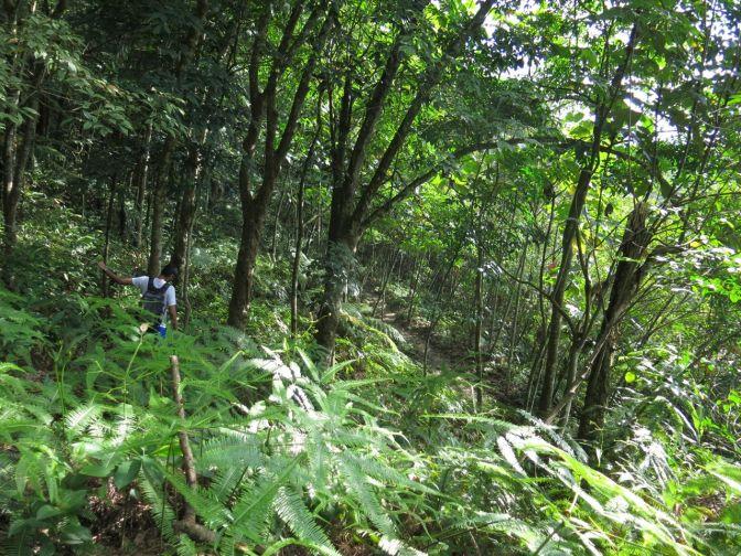 Bukit Melati hike
