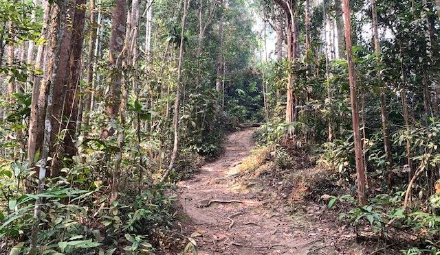 Trans Gunung Angsi hike (from Bukit Putus)