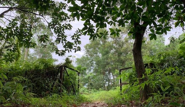 Desa Petaling hike