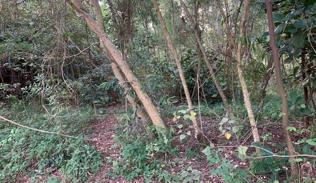 Putrajaya to get new trail