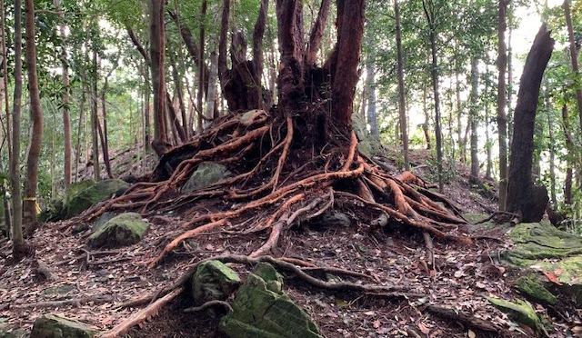 Bukit Changkat Asa hike